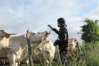 牛と遊ぶニコラくん.jpg